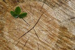 Giovane albero con le foglie verdi ed i tiri dell'offerta Immagine Stock Libera da Diritti