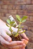 Giovane albero dei soldi in mani Fotografia Stock Libera da Diritti