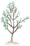 Giovane albero in primavera Immagine Stock