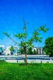 Giovane albero sull'argine della passeggiata del fiume di Mosca Fotografia Stock Libera da Diritti