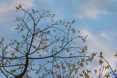 Giovane albero verde sotto Pale Sky fotografie stock