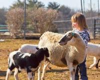 Giovane amante delle pecore Fotografia Stock Libera da Diritti