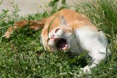 Giovane animale sveglio - gatto che gioca al giardino Immagine Stock