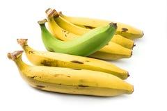 Giovane banana verde che attacca su Fotografie Stock Libere da Diritti