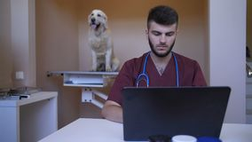 Giovane battitura a macchina veterinaria sul computer portatile alla clinica dell'animale domestico stock footage