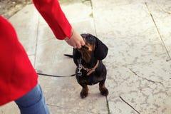 Giovane bella donna che alimenta il suo cane dolce playfuly nella via fotografia stock libera da diritti