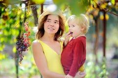 Giovane bella ragazza e piccolo bambino che selezionano uva piena nel giorno soleggiato in Italia Fotografia Stock Libera da Diritti