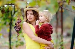 Giovane bella ragazza e piccolo bambino che selezionano uva piena nel giorno soleggiato in Italia Fotografie Stock Libere da Diritti