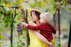 Giovane bella ragazza e piccolo bambino che selezionano uva piena nel giorno soleggiato in Italia Fotografia Stock