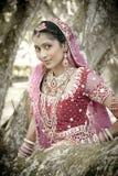 Giovane bella sposa indù indiana che sta sotto l'albero Fotografia Stock