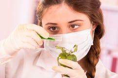 Giovane bello biologo della donna che sperimenta con Immagine Stock