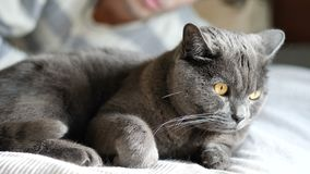 Giovane bello che stringe a sé il suo Gray Cat Pet video d archivio