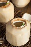 Giovane bevanda bianca cruda della noce di cocco Fotografia Stock Libera da Diritti