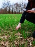 Giovane biologo della donna di agricoltura che ispeziona il raccolto Immagini Stock