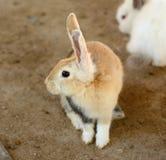 Giovane Bunny Rabbit Immagine Stock Libera da Diritti