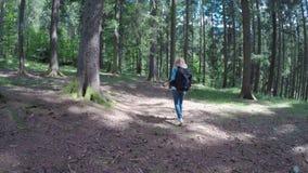 Giovane campeggiatore femminile con lo zaino che cammina e che ammira lentamente la foresta della montagna - video d archivio