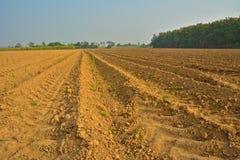 Giovane campo di grano Fotografia Stock