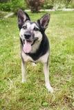 Giovane cane Immagini Stock Libere da Diritti