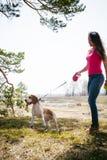 Giovane cane da lepre delle razze del cane di animale domestico che cammina nel parco all'aperto Immagini Stock Libere da Diritti