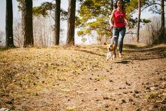 Giovane cane da lepre delle razze del cane di animale domestico che cammina nel parco all'aperto Fotografie Stock