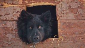 Giovane cane ibrido allegro in fossa di scolo Inverno stock footage