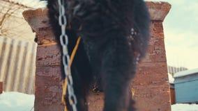 Giovane cane ibrido allegro in fossa di scolo Inverno video d archivio