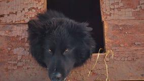 Giovane cane ibrido allegro in fossa di scolo Inverno archivi video