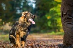 Giovane cane sottomesso che si siede nella foresta fotografia stock