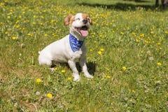 Giovane cane sveglio divertendosi in un parco all'aperto Il tempo di primavera… è aumentato foglie, sfondo naturale Verde Fotografia Stock Libera da Diritti