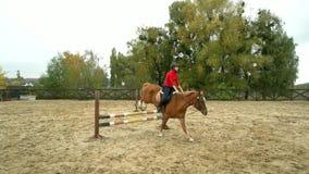 Giovane cavaliere femminile sul cavallo di baia che salta sopra la transenna archivi video