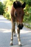 Giovane cavallo Immagini Stock
