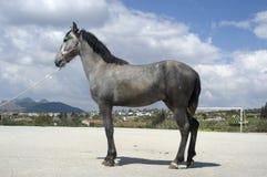Giovane cavallo fotografia stock libera da diritti