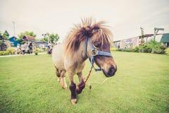 Giovane cavallo nel campo illustrazione vettoriale