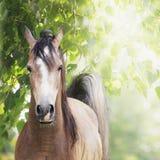 Giovane cavallo su fondo di fogliame Fotografie Stock
