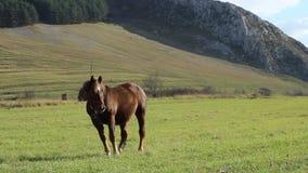 Giovane cavallo sul pascolo archivi video