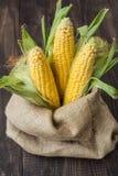 Giovane cereale nella borsa Fotografie Stock