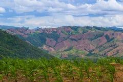 Giovane cereale verde in azienda agricola Fotografia Stock