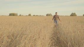 Giovane che cammina in un giacimento di grano dorato e nelle orecchie commoventi dello slowmo maturo del grano stock footage