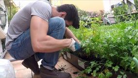 Giovane che fa il giardinaggio nel suo giardino domestico stock footage