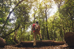 Giovane che fa un'escursione nel paesaggio maestoso in foresta Fotografia Stock