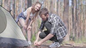 Giovane che mette su una tenda in un'abetaia mentre la sua amica che sta vicino Amanti di natura che si rilassano all'aperto stock footage