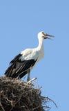 Giovane cicogna nel nido Immagini Stock Libere da Diritti