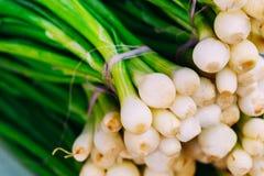 Giovane cipolla verde cruda organica fresca per la vendita a marzo di verdure Immagini Stock Libere da Diritti