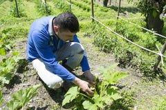 Giovane coltivatore Immagine Stock