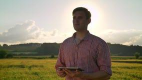 Giovane compressa sicura della tenuta dell'agronomo ed esaminare il giacimento di grano intorno, bella natura con il tramonto nel stock footage