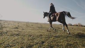Giovane cowgirl al cavallo marrone al rallentatore all'aperto Cavallo da equitazione della giovane donna archivi video