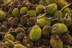 Giovane danno del Durian dalla tempesta di estate fotografie stock libere da diritti