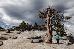 Giovane donna accanto ad un albero della sequoia in Yosemite Fotografia Stock