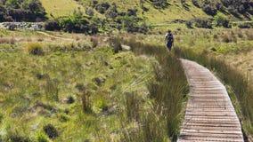 Giovane donna adulta che esplora facendo un'escursione pista Fotografie Stock