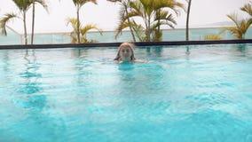 Giovane donna allegra felice nella serie rossa di nuoto nella piscina Bella acqua del turchese di giorno soleggiato video d archivio